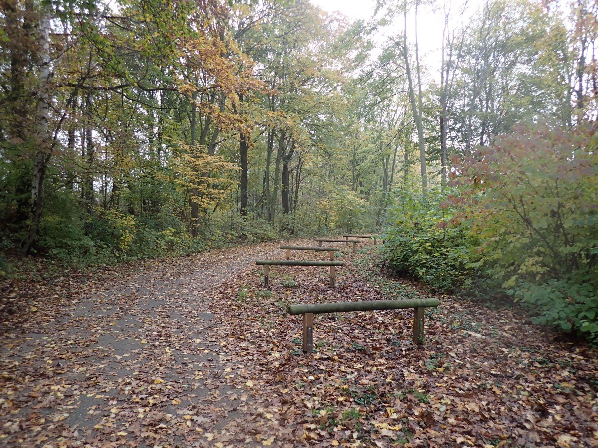 Herbstimpressionen aus Lindweiler